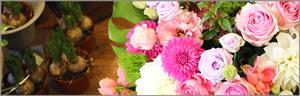 ake_oiwai_flower